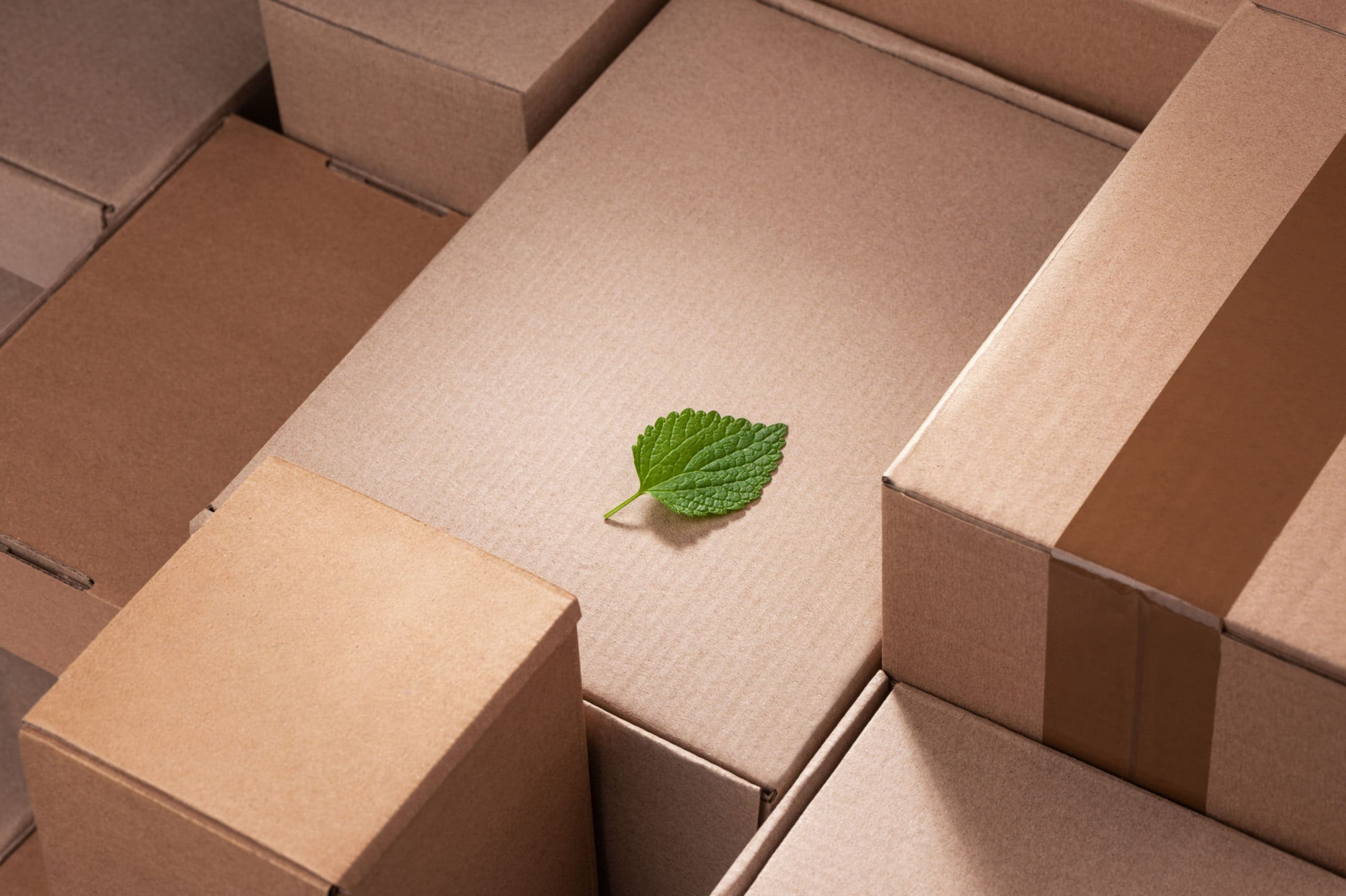 6 Companies Innovating Eco-Friendly Packaging